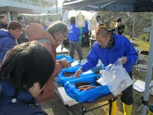 七ヶ浜産の魚も販売!