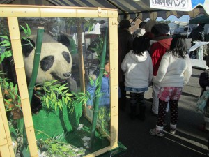 貴重な本物のパンダの剥製展示会