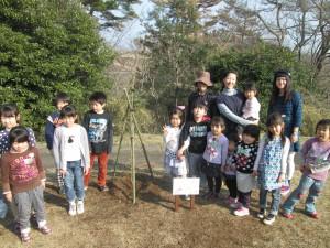 きずな公園 桜の植樹