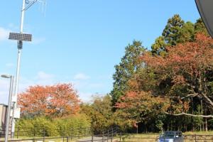 紅葉も綺麗な時期です。