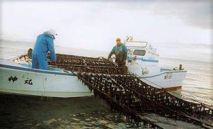 のり漁の様子