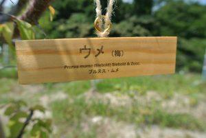 学名も記載された樹名板