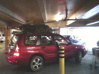 TREE CAR.JPG